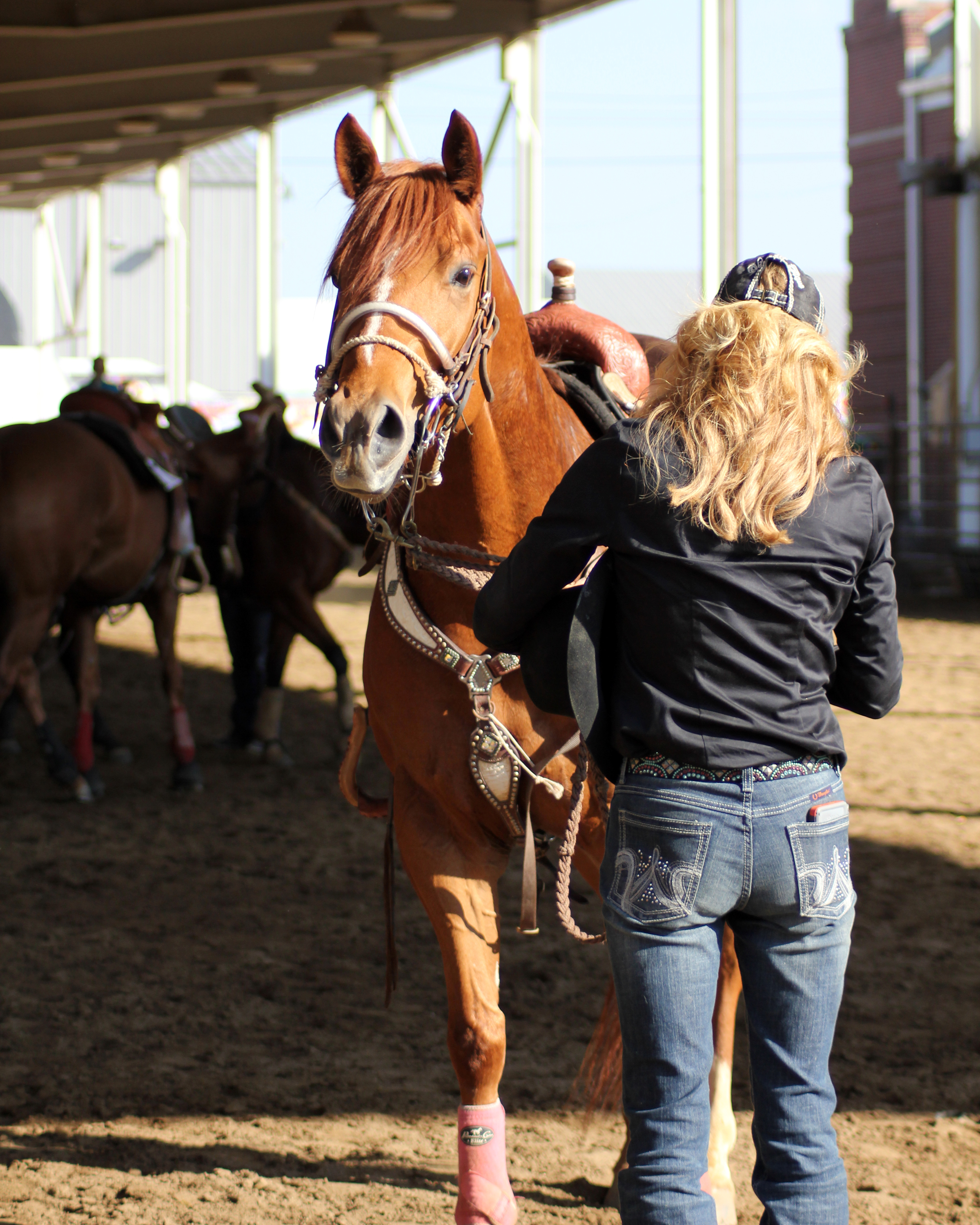 essays about horses in america Horse essay the horse is a very useful and domestic animal and they have  four legs its legs are slender but strong enough to run miles at.