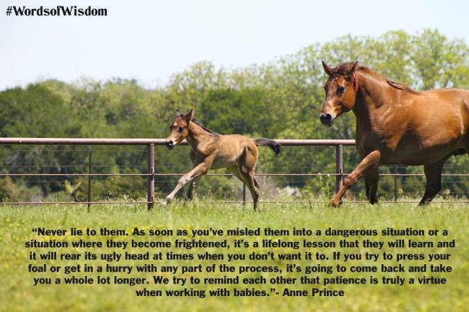 Courtesy Equine Chronicle