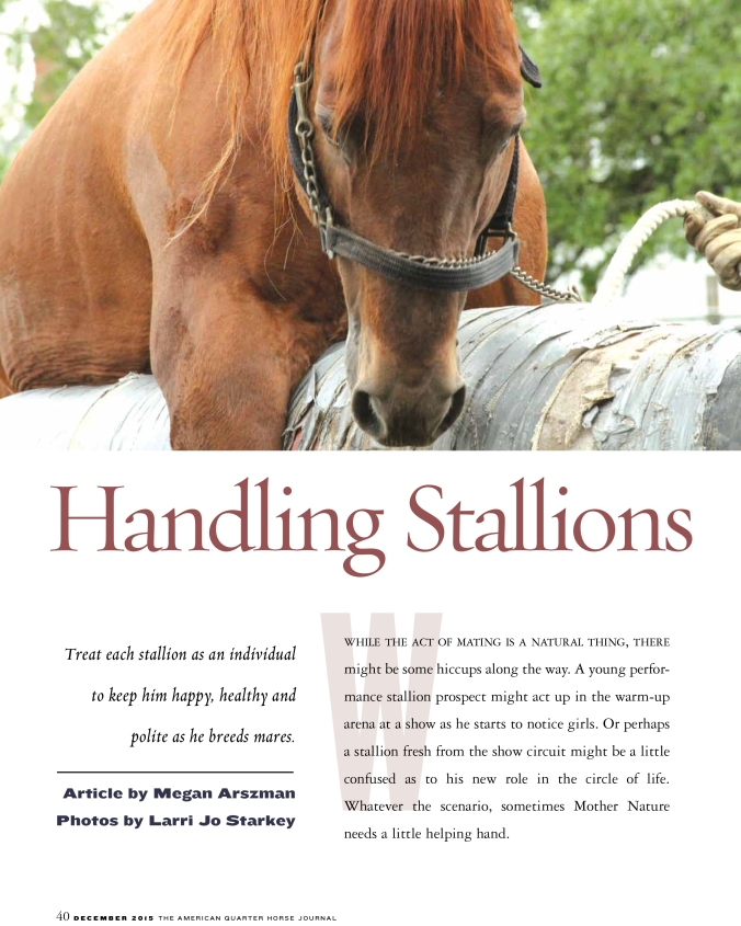 Stallion Handling-1
